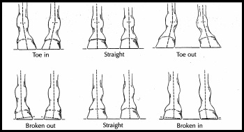 hoof care balance and angles in foal trimming